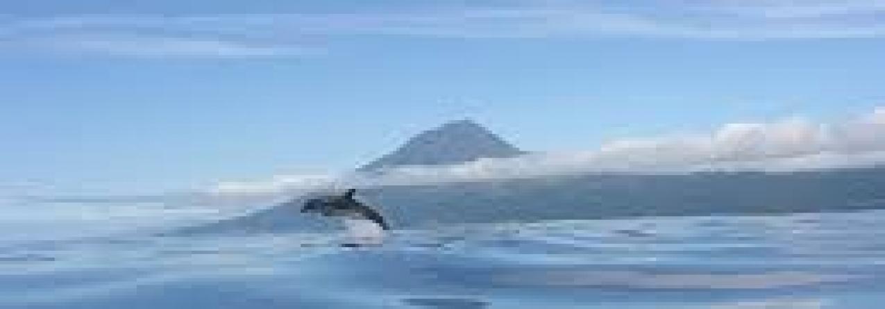 Mais de 2 milhões de km2 de espaço marítimo sob a gestão dos Açores