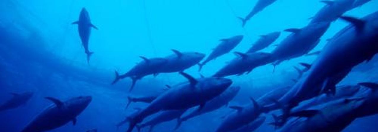 Pescadores zangados com Lotaçor