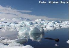 Caranguejos gigantes estão a invadir o fundo do mar na Antárctida
