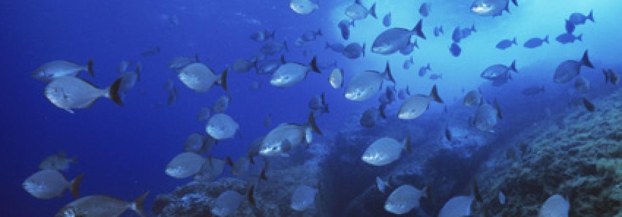 Pesca para 2012 no Atlântico e mar do Norte