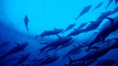 Governo satisfeito com decisões da comissão de gestão da pesca do atum no Atlântico