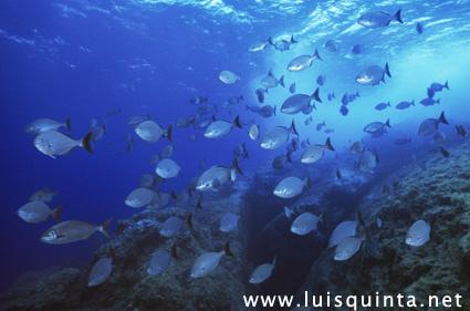 Especialistas querem apoiar Açores a criar plano marítimo