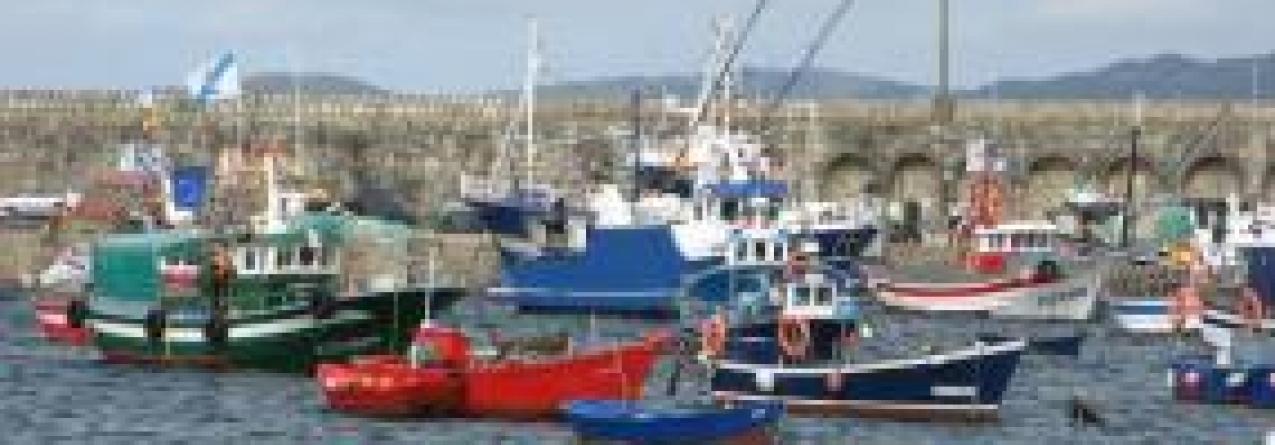 """Embarcações de pesca de boca aberta """"estão isentas"""" do diário de pescas eletrónico"""