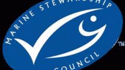 Suspensão da certificação MSC para a pesca da Sardinha Portuguesa Com Arte de Cerco