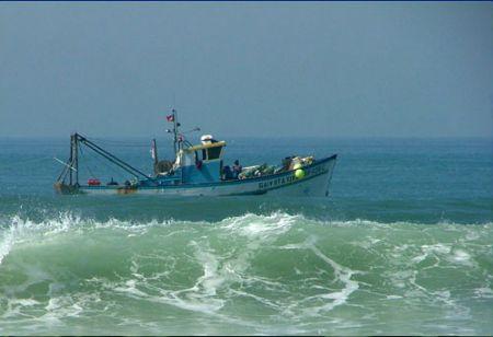 Proibidas descargas de pescado capturado com redes de arrasto pelo fundo