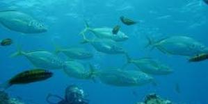 PS propõe quatro áreas marinhas de restrição temporária de pesca em Santa Maria