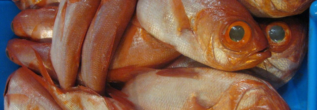 Pescado descarregado nos portos do arquipélago aumentou 78% em janeiro e fevereiro