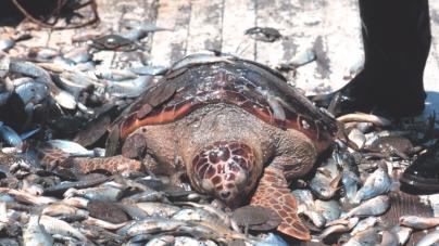 Portugal defende que pescadores possam continuar a rejeitar peixe depois de capturado
