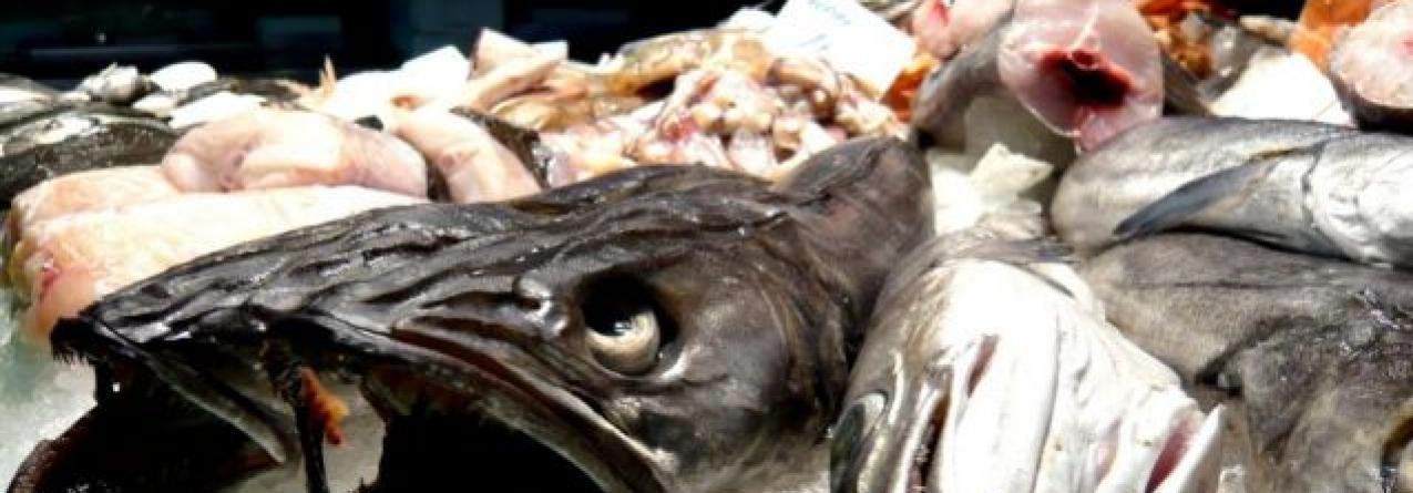 """Consumidores """"enganados"""" compram peixe mais barato por espécies mais caras"""
