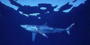 Governo encomenda ao DOP estudo para medidas de proteção aos tubarões