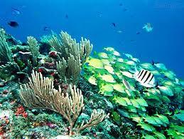 Jangada de lixo entre as Caraíbas e os Açores, constituem um perigo para a biodiversidade marinha nos mares da Região