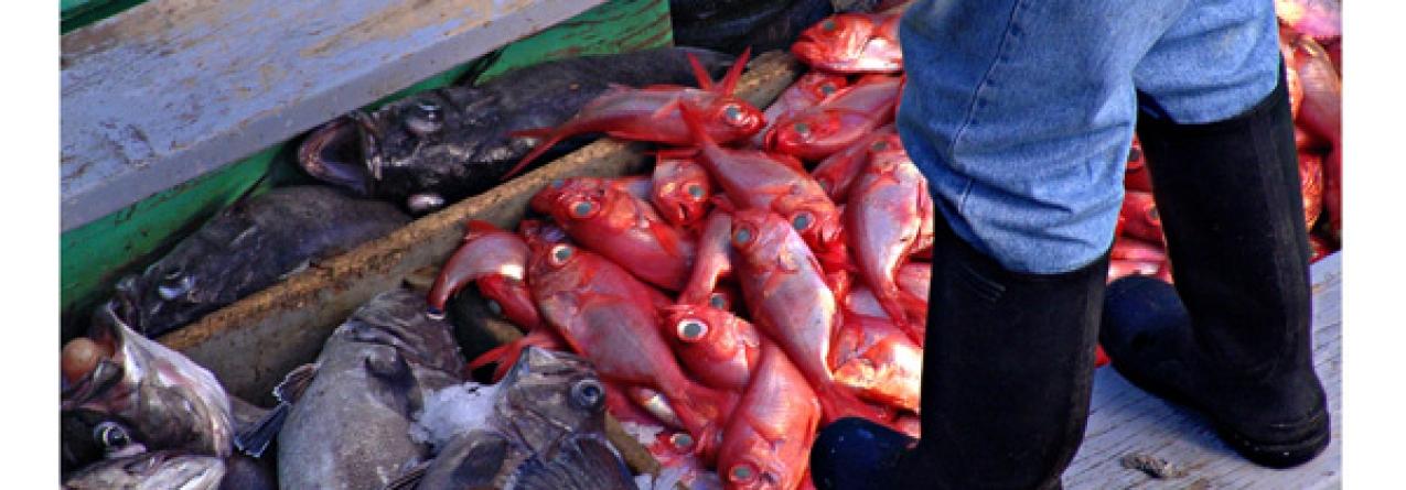 Rendimentos da pesca aumentaram na Região