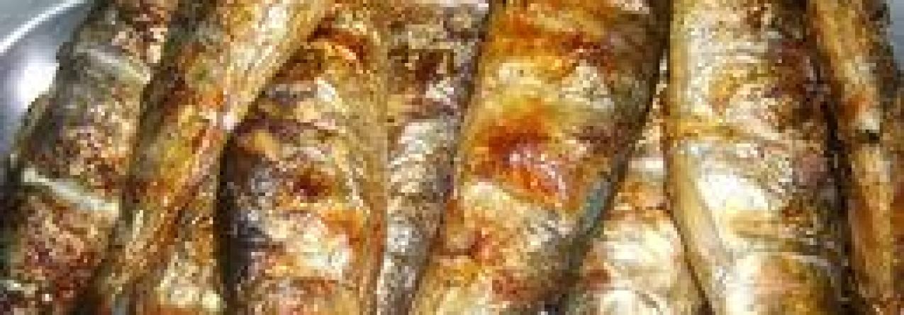 Costa portuguesa perdeu 55% de sardinha nos últimos dez anos