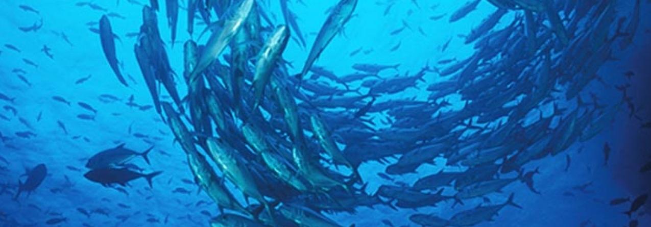 Cidadãos manifestam-se contra a delapidação dos recursos marinhos