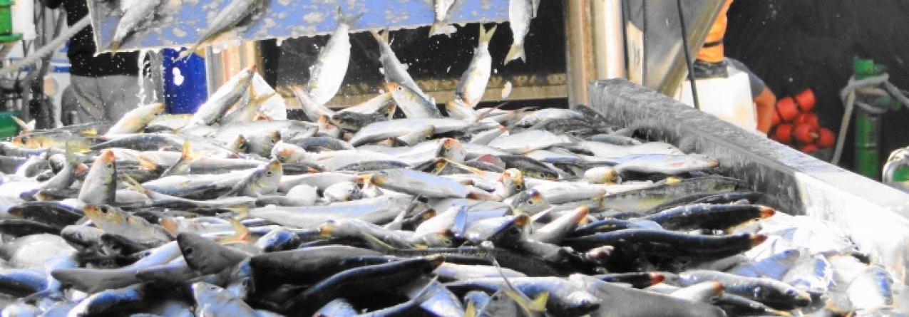 Frota de pesca pára um mês
