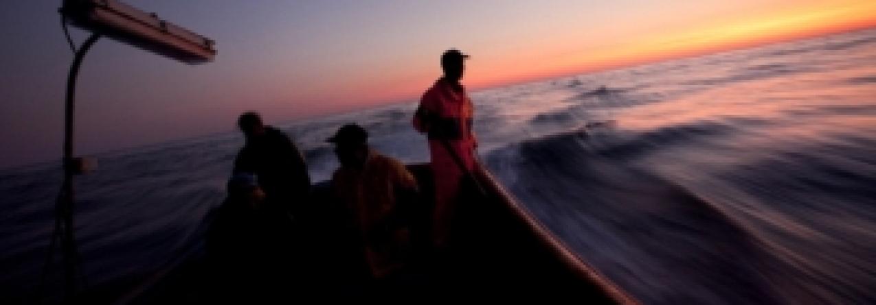 Série Mar Português: pesca, um mar de oportunidades perdidas (vídeo)