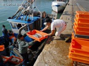 Total da pesca descarregada nos Açores em 2012 caiu 16,9 por cento