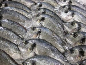 Peixe é fresco mas mal conservado no frio