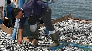 """""""Importação anual de pescado equivale a dois submarinos"""""""