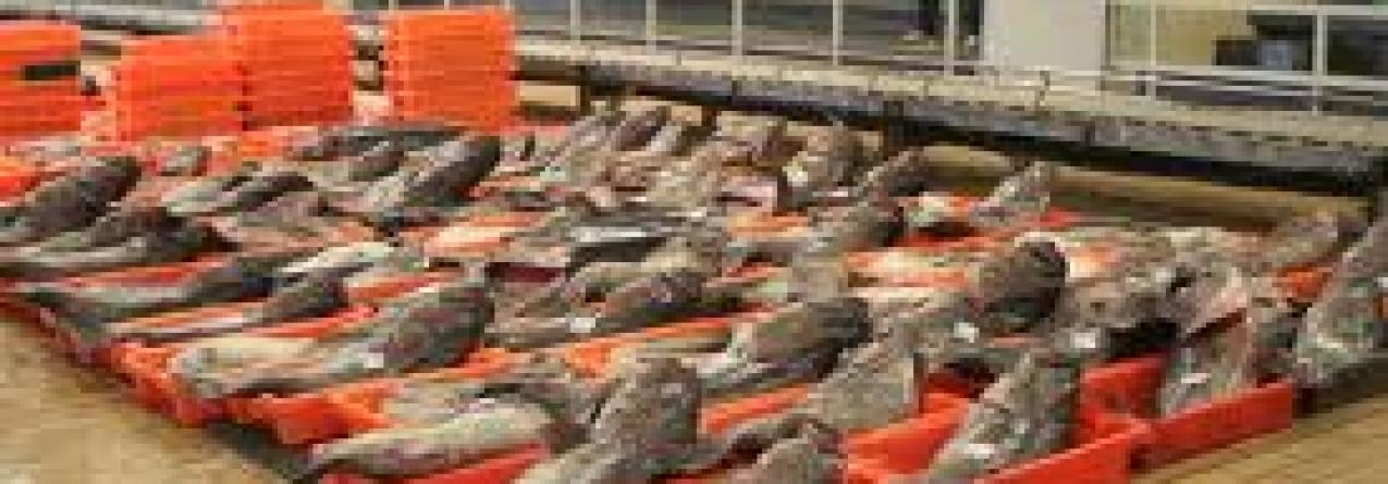Armadores de pesca defendem redução de lotas para aumentar a concorrência