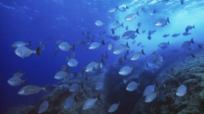 Ministério da Defesa condenado a indemnizar pescadores dos Açores por não fiscalizar pesca estrangeira
