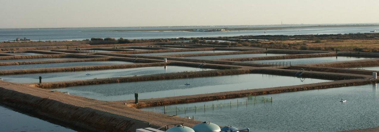 """Semear para pescar"" – reportagem SIC sobre Aquacultura em Portugal (vídeo)"