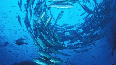 """Gestão pesqueira tem de ser repensada para evitar rutura de """"stocks"""" na costa portuguesa"""