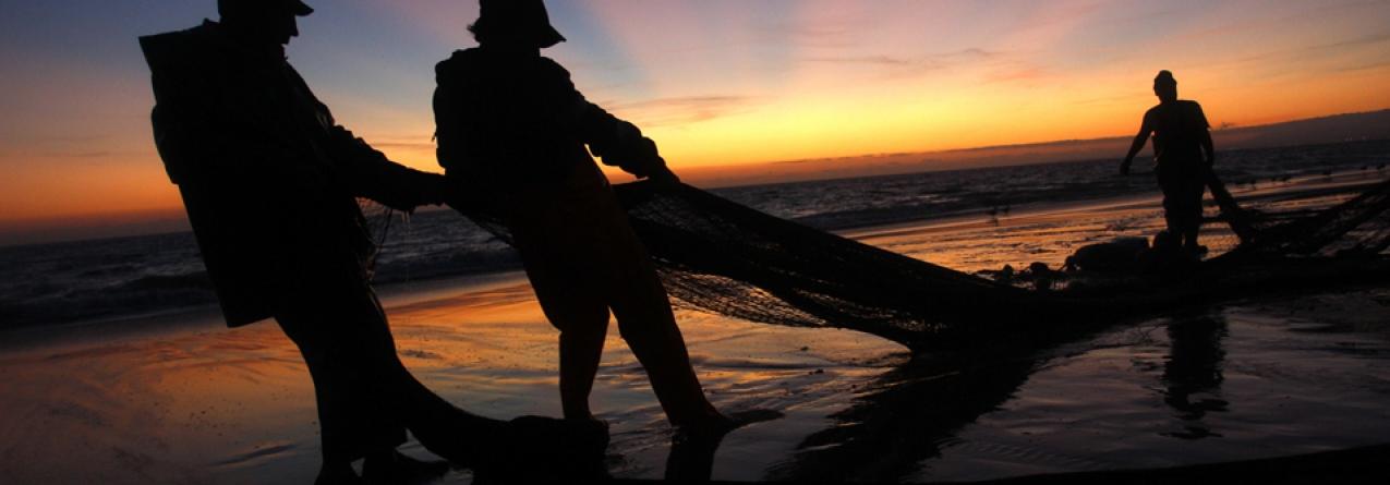 """Pescas com """"crescimento acentuado"""" nos últimos dois anos"""