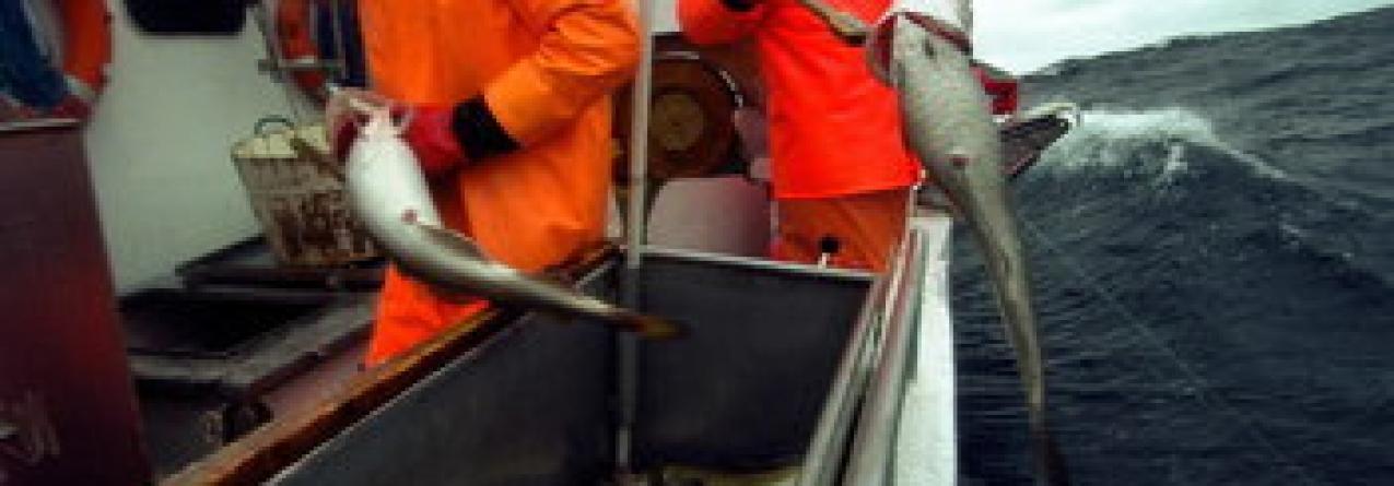 Pescadores da Noruega preocupados com a crise em Portugal