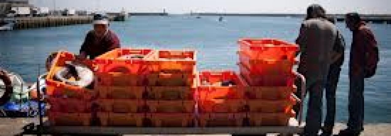 Região adquire mais de 12 mil caixas para pescado por ano