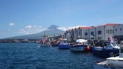 Falta gelo aos pescadores do Faial