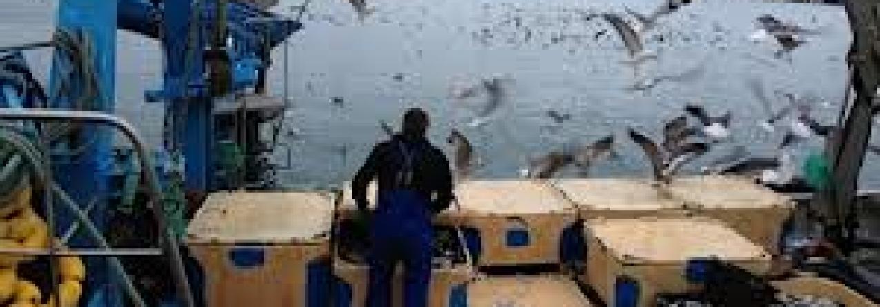 """Reportagem """"Pesca por um fio"""" (vídeo)"""