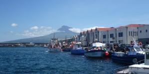 Pesca gera menos 4M€ em 2013