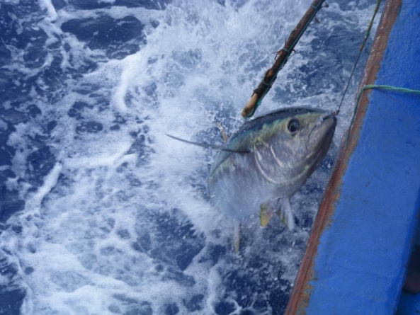 Aumento da quota de pesca de atum patudo abrange todo o país