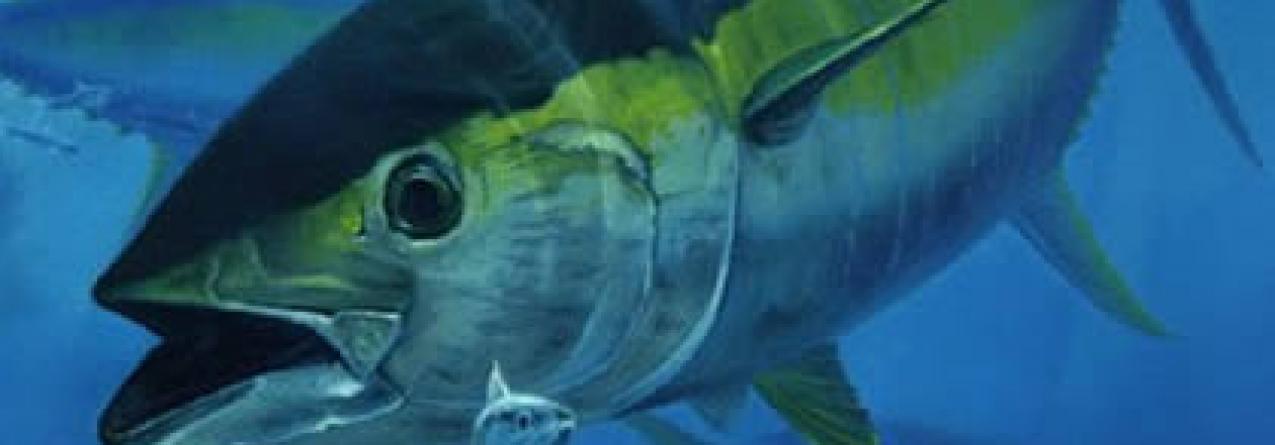Abertura da quota do atum patudo