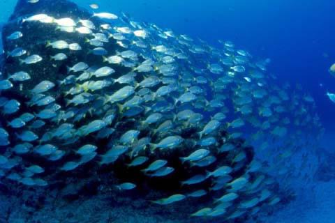 Cerca de 100 países discutem alargamento de áreas marinhas protegidas
