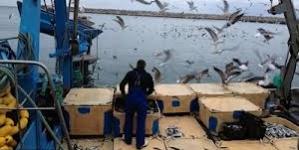 Comissão Europeia propõe cortes em quatro espécies capturadas nas águas portuguesas
