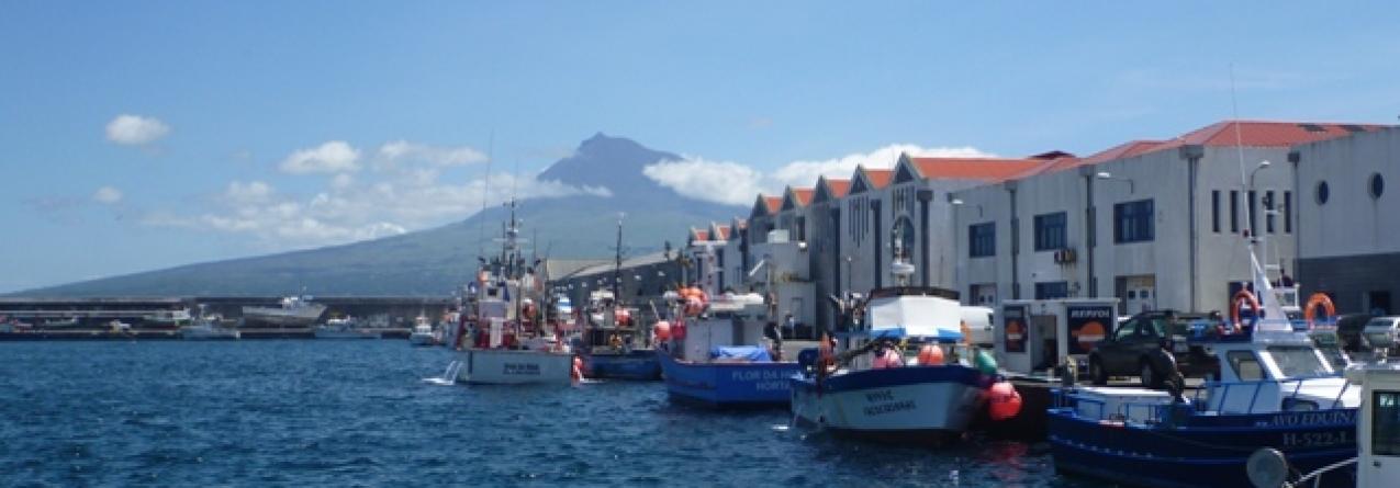 Portos e Núcleos de Pesca dos Açores vão ter novas regras de utilização de espaço