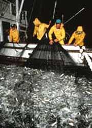 Barcos obrigados a pescar menos
