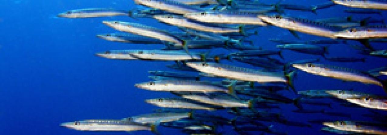 Pescas: Ministros da UE iniciam habitual maratona negocial de quotas