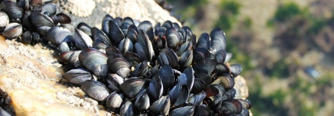 Apanha de espécies marinhas com nova regulamentação