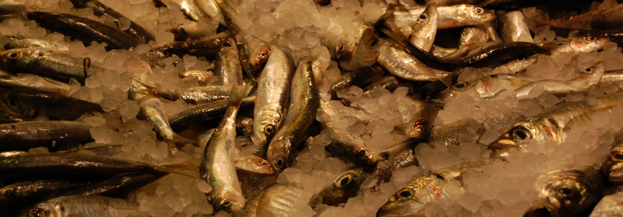 Governo estabelece regras para venda de pescado apreendido