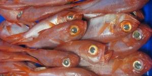 Embargo russo: A comissária Maria Damanaki pronta para apoiar o sector das pescas da UE com ajuda financeira e flexibilidade das quotas