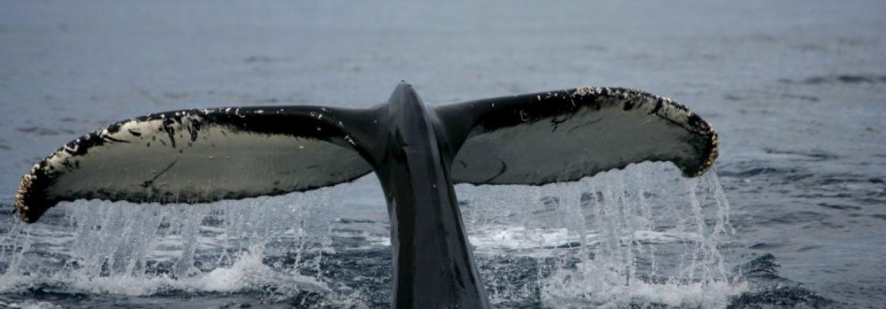 Novo atlas sobre vida marinha no Antártico regista mais de nove mil espécies