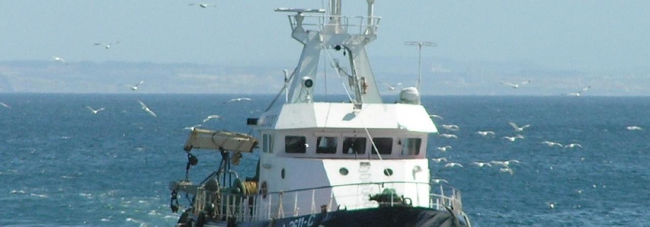 Governo dos Açores regulamenta pesca por Arte de Cerco e por Arte de Levantar