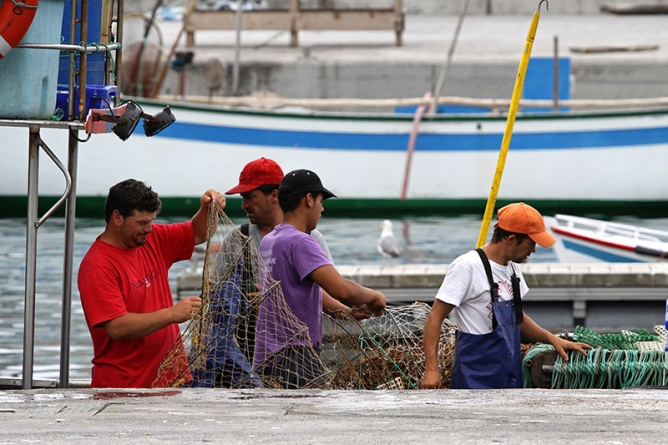 Governo regulamenta valores de captura diária para chicharro, sardinha e cavala