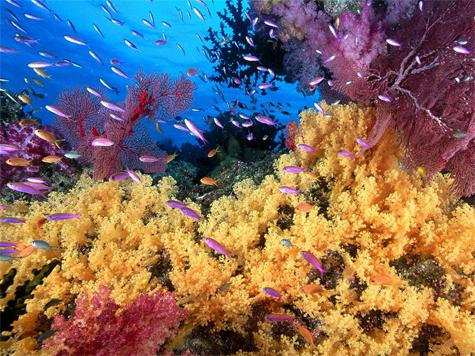 """Pesca com palangre de fundo nos Açores causa """"danos físicos"""" em corais"""
