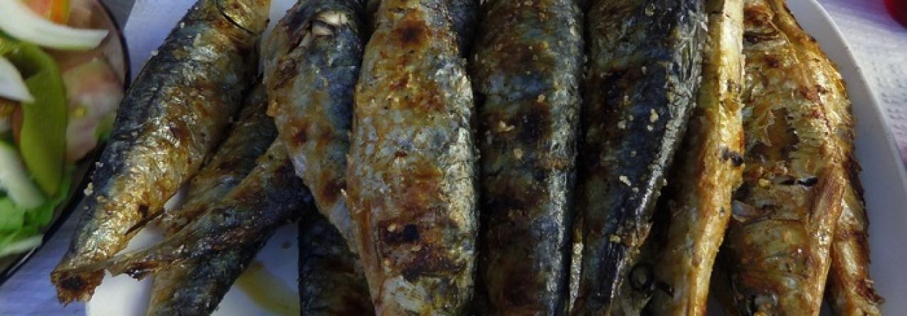 """""""Todo o cuidado é pouco"""" para salvar sardinha portuguesa em risco"""