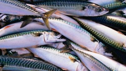 Pescadores da Póvoa de Varzim queixam-se de não conseguirem vender o peixe capturado
