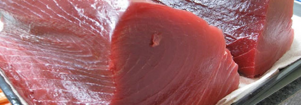 Fausto Brito e Abreu discorda com o aumento da quota de atum rabilho atribuída às armações